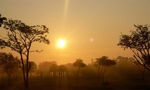 savann i solnedgång